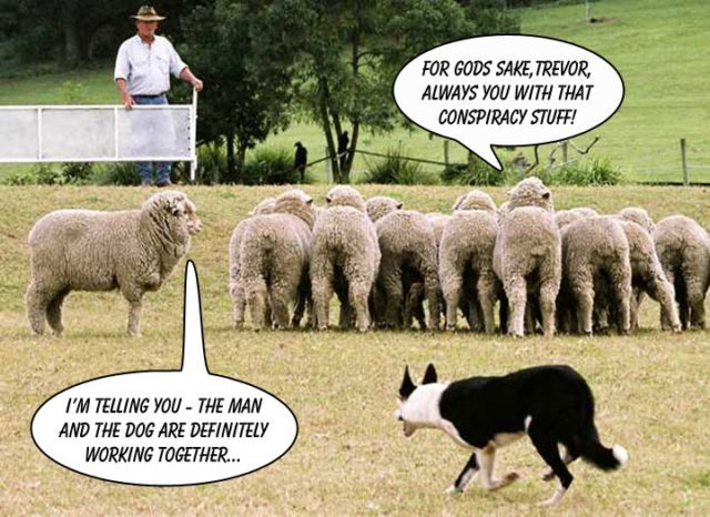 sheep-dog-trials-im-telling-you-the-man-and-the-do1