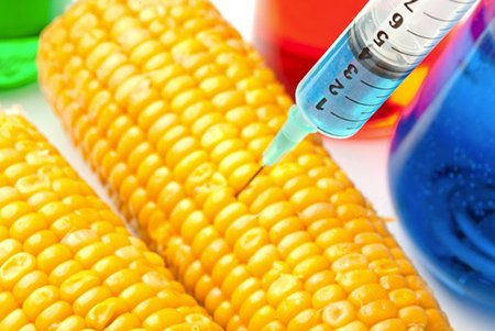 Corn-being-injected