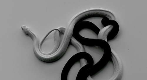 Black and white snakes interwoven togheter, representing of same concept of mixing good and evil, light and darkness, found in the checkerboard pattern