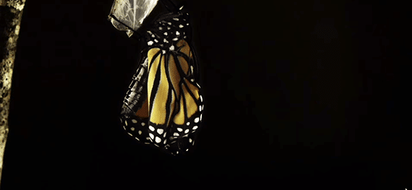 Later in the video we see (for maybe .05 seconds) a caterpillar morphing into a butterfly. While this is a beautiful miracle of nature, in the context of the video, this image has a darker meaning.