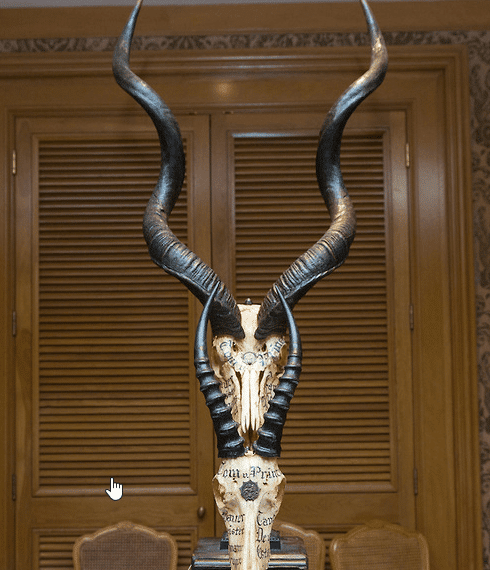 A display of horned skulls with cryptic inscriptions on them.