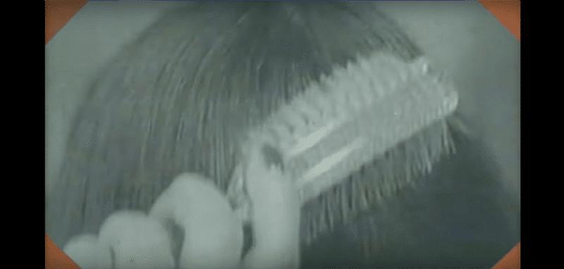 mushroom11 The Disturbing Meaning of KrainaGrzybowTV (Mushroomland) : The Creepiest Channel on YouTube