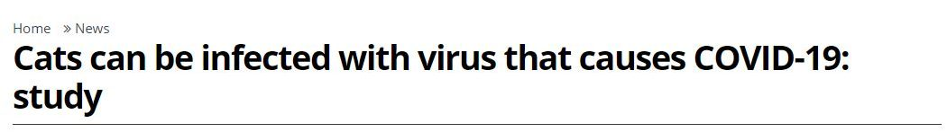 """2020 05 26 17 05 28 Cats can be infected with virus that causes COVID 19 study North Shore News e1590527646492 The Simpsons' Clip About a """"Cat Flu"""" Was Incredibly Prophetic"""